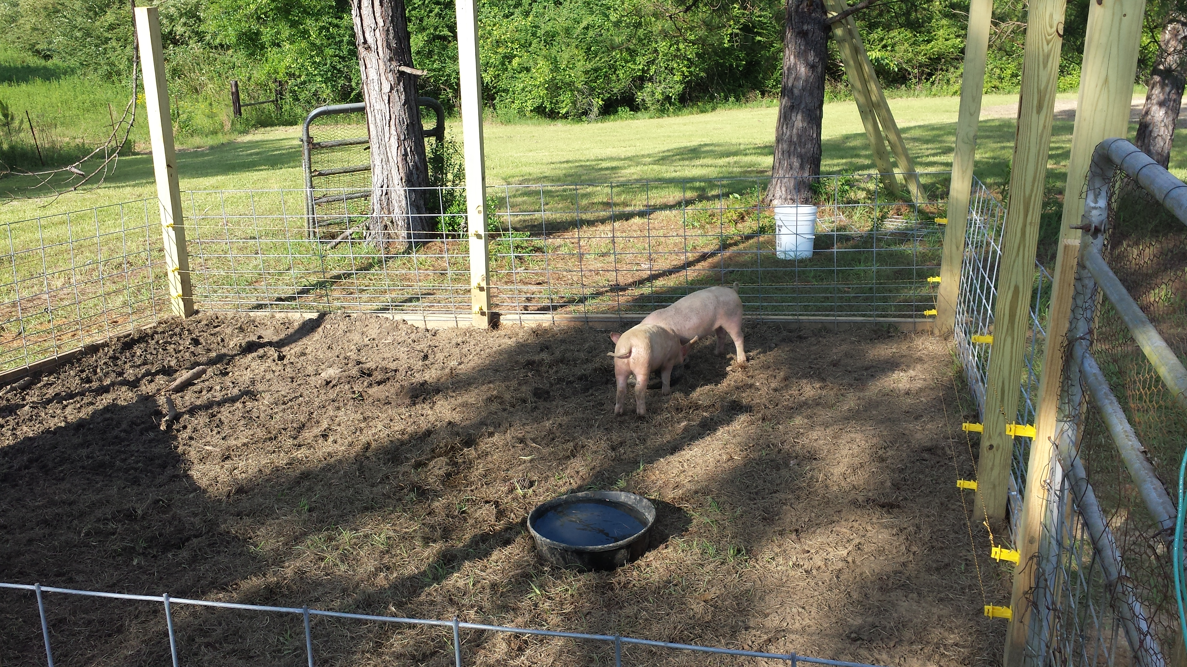 Magnificent Pigs Electric Fence Wire The Best Electrical